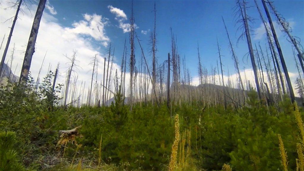 Frame from video captured in Glacier National Park, August 2013